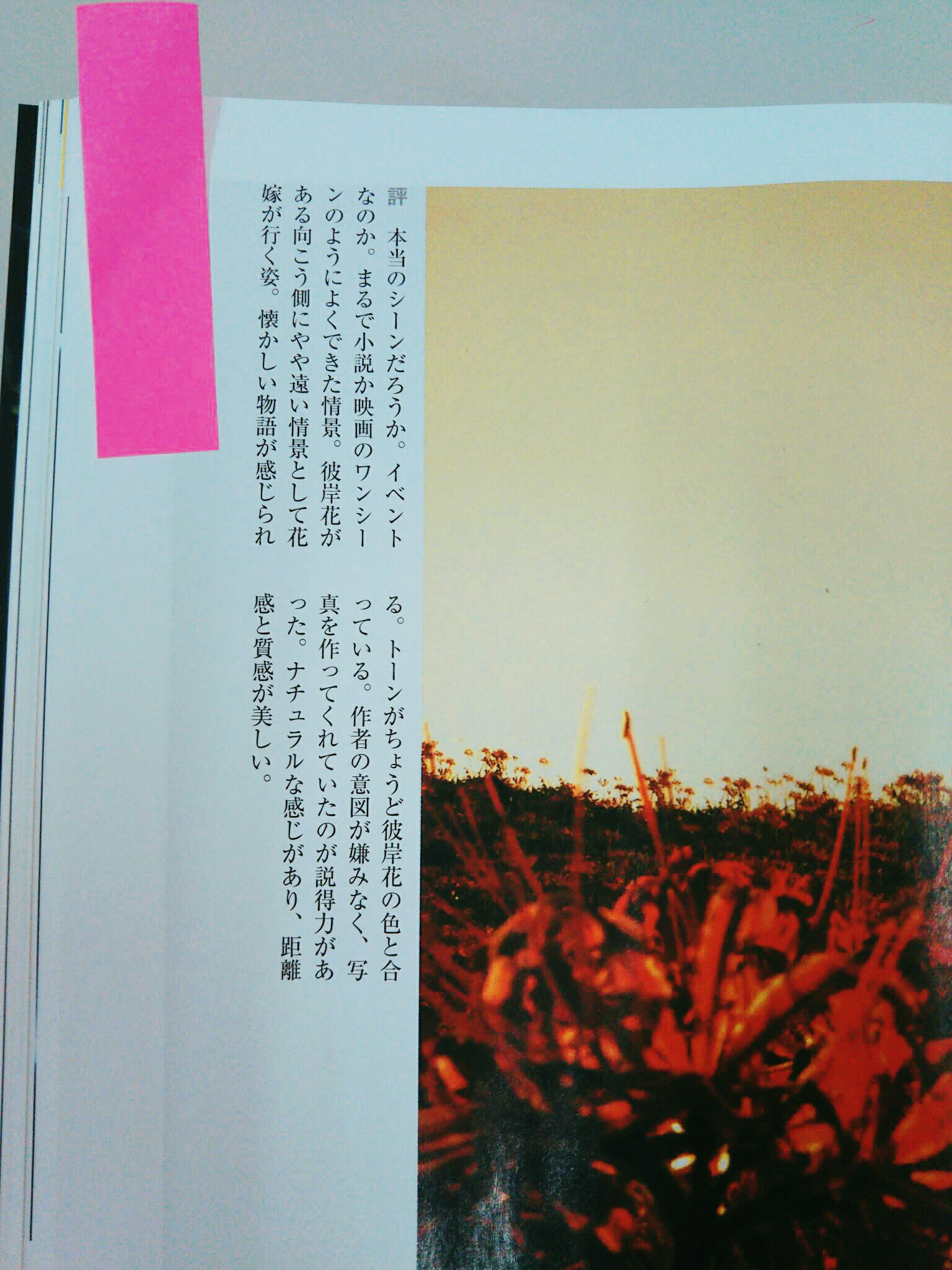 「日本カメラ」で金賞を獲った写真が「彼岸花の結婚式」評